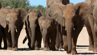 Full Day Addo Elephant National Park Tour