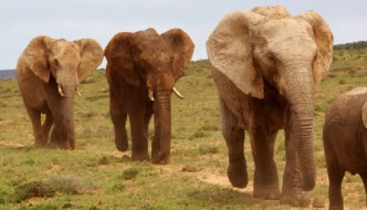 Addo Elephant Park Shore Excursion