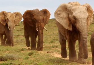 Addo Elephant Park Excurison