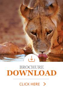 Download Digi-Brochure