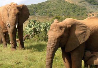 Cape Town, Garden Route & Safari Wanderlust