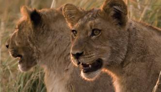 Chobe Wildlife Safari