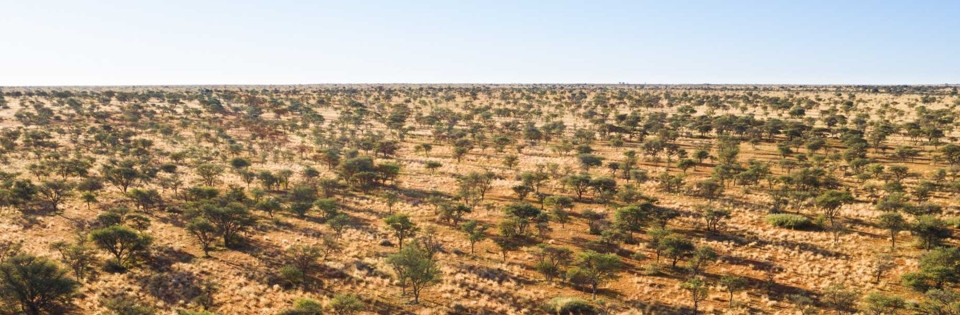 The Green Kalahari