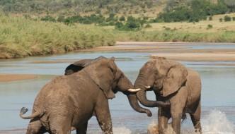Hluhluwe Safari Shore Excursion