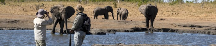Hwange National Park – Classic & Diverse