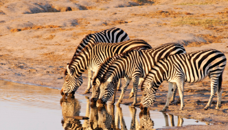 Etosha Fly-In Safari