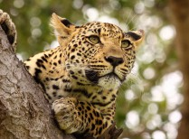 Full Day Kruger Park Open Vehicle Safari