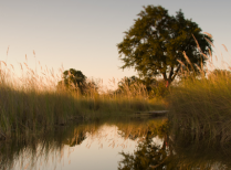 Okavango Delta Explorer