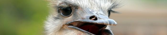 Oudtshoorn