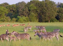 Afternoon Kruger Park Open Vehicle Safari
