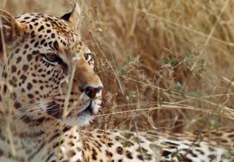 World's Fastest Cats Getaway