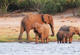 Zambia Victoria Falls & Chobe Fly-in Safari