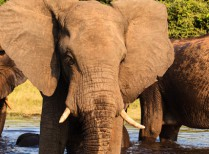 Zimbabwe Victoria Falls & Chobe Getaway