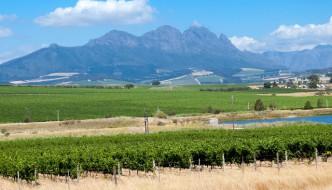 Half Day Cape Winelands Tour