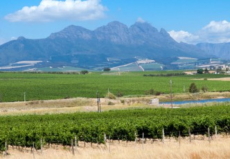 Half Day Cape Winelands Tour
