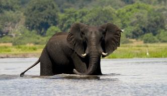 Chobe Day Trip - Departing Victoria Falls Town