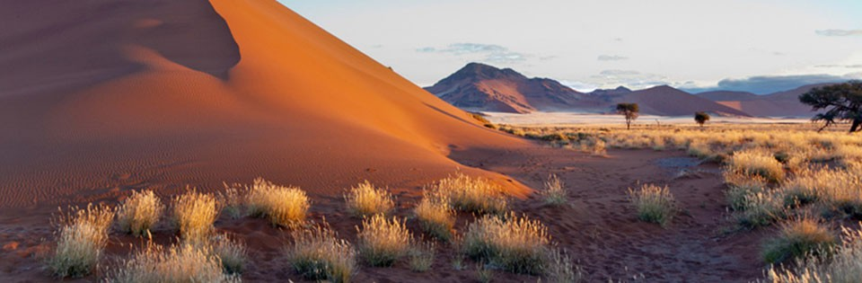 Why Choose Namibia for Your Next Safari