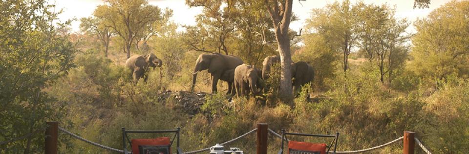 Kruger Park Hoyo Hoyo Safari