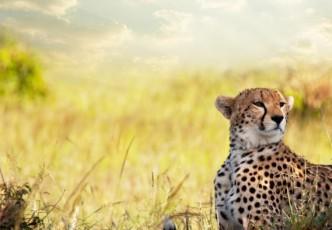 Namibia Etosha Safari – Departing Swakopmund