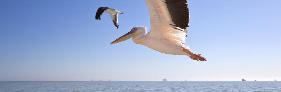 Walvis Bay Dolphin & Seal Catamaran Cruise