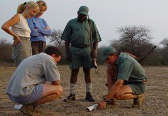 Kruger Park Walk in the Wild Safari