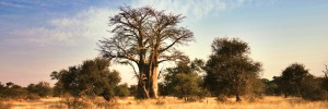 The Kruger National Park