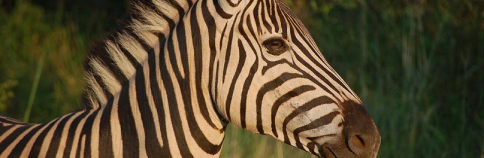 Kruger Park / Swaziland and KwaZulu-Natal by Motorhome